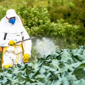 Capao Bonito, Sao Paulo, Brazil, December 18, 2009. Farmer with manual pesticide sprayer on cabbage field in Sao Paulo state